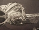 Same Sleepy Dog. 8x10, chalk, 2006.